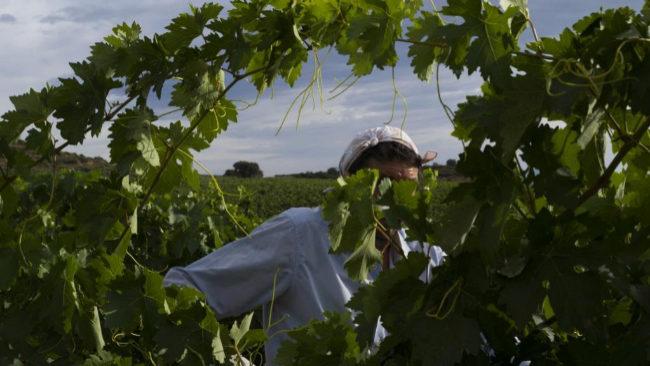 Una cuadrilla trabaja en un viñedo en los alrededores de La Rioja.