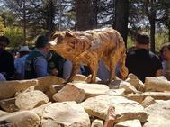 Vista de la estatua dedicada a Camilla, la perra que ayudó a salvar la vida de numerosas personas tras el terremoto de Amatrice, inaugurada en Amatrice el 23 de agosto de 2017.