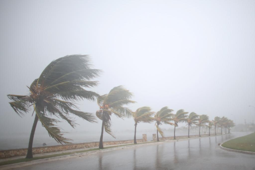 Palm trees sway in the wind prior to the arrival of the Hurricane Irma in Caibarien, Cuba, September 8, 2017. REUTERS/Alexandre Meneghini