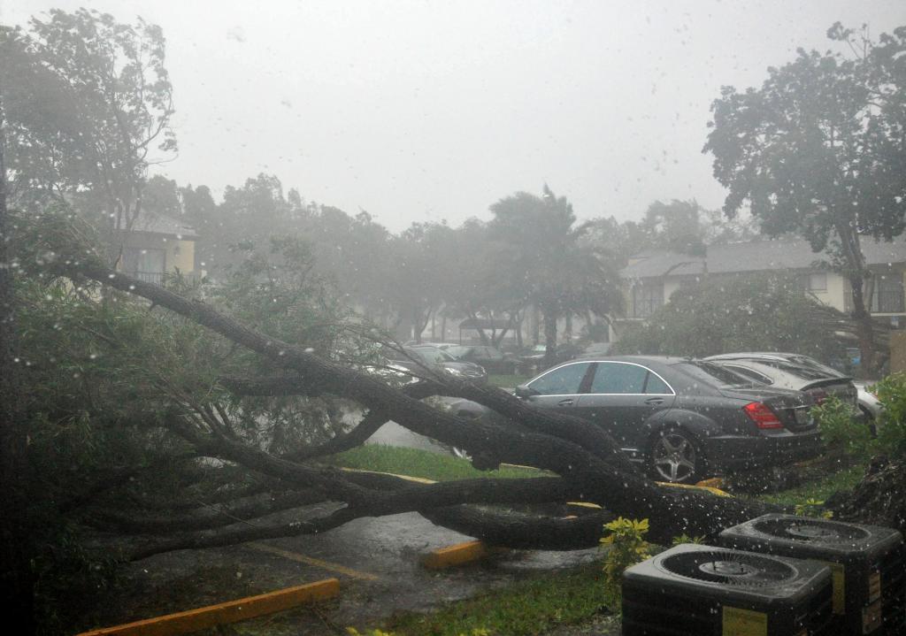 Tres árboles caídos en medio de un parking de Pembroke Pines.