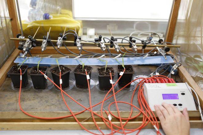 La tecnología  EPG (Electrical penetration graph) permite analizar el...