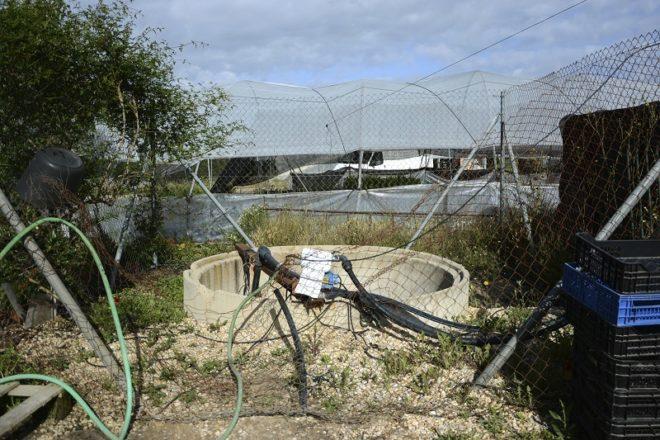 Más de 800 pozos ilegales secan Doñana con la permisividad de las ...