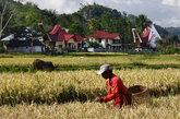Los Tana Toraja viven en uno de los lugares más inaccesibles que se...