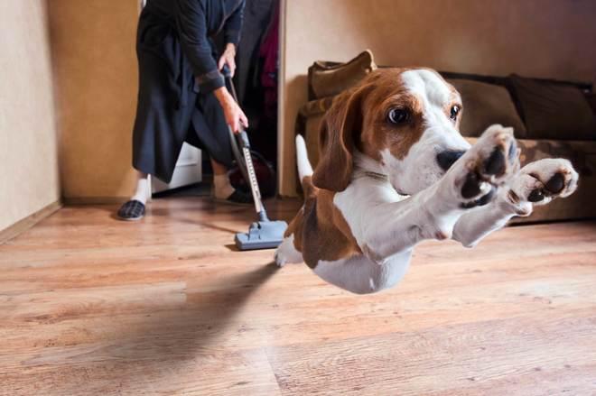 Cómo reconocer las señales de miedo en un perro