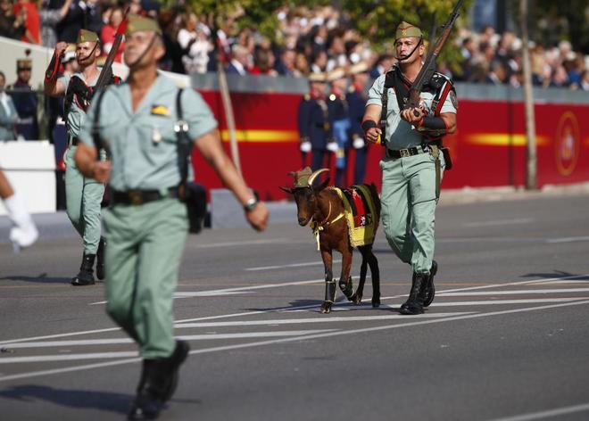 La cabra de la Legión, durante el desfile militar por el 12-O, en el...