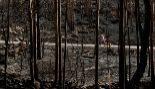 El fuego arrasó 35.500 hectáreas, más que en 2014, 2015 y 2016  juntos