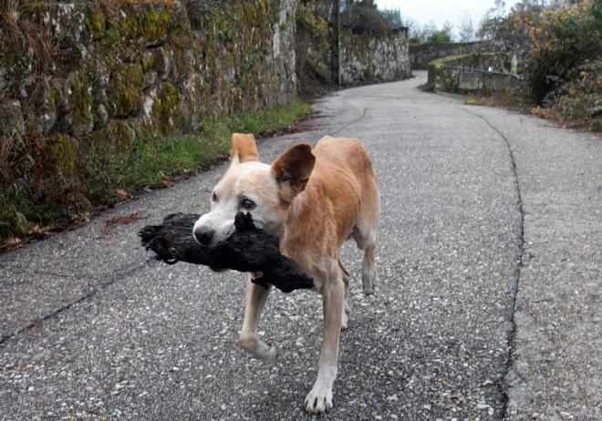 La perra de Chandebrito