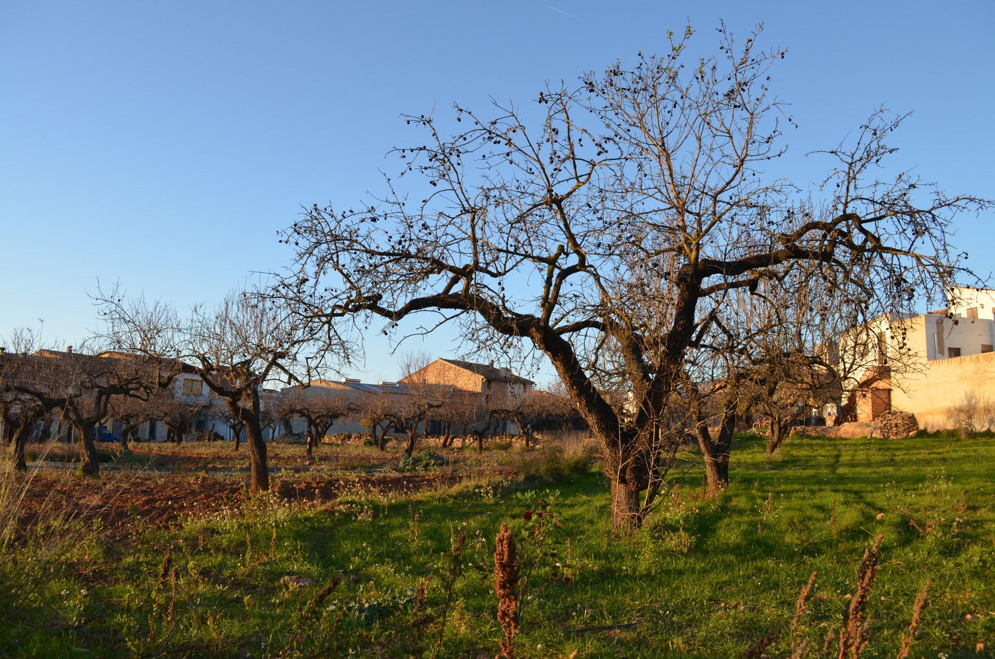 La provincia de Castellón pierde 50.000 hectáreas de cultivo y ya sólo trabaja el 20% de la tierra