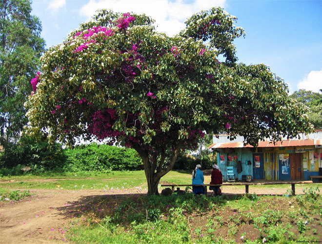 El rincón de Kenia donde nace el té más preciado de África | Viajes ...