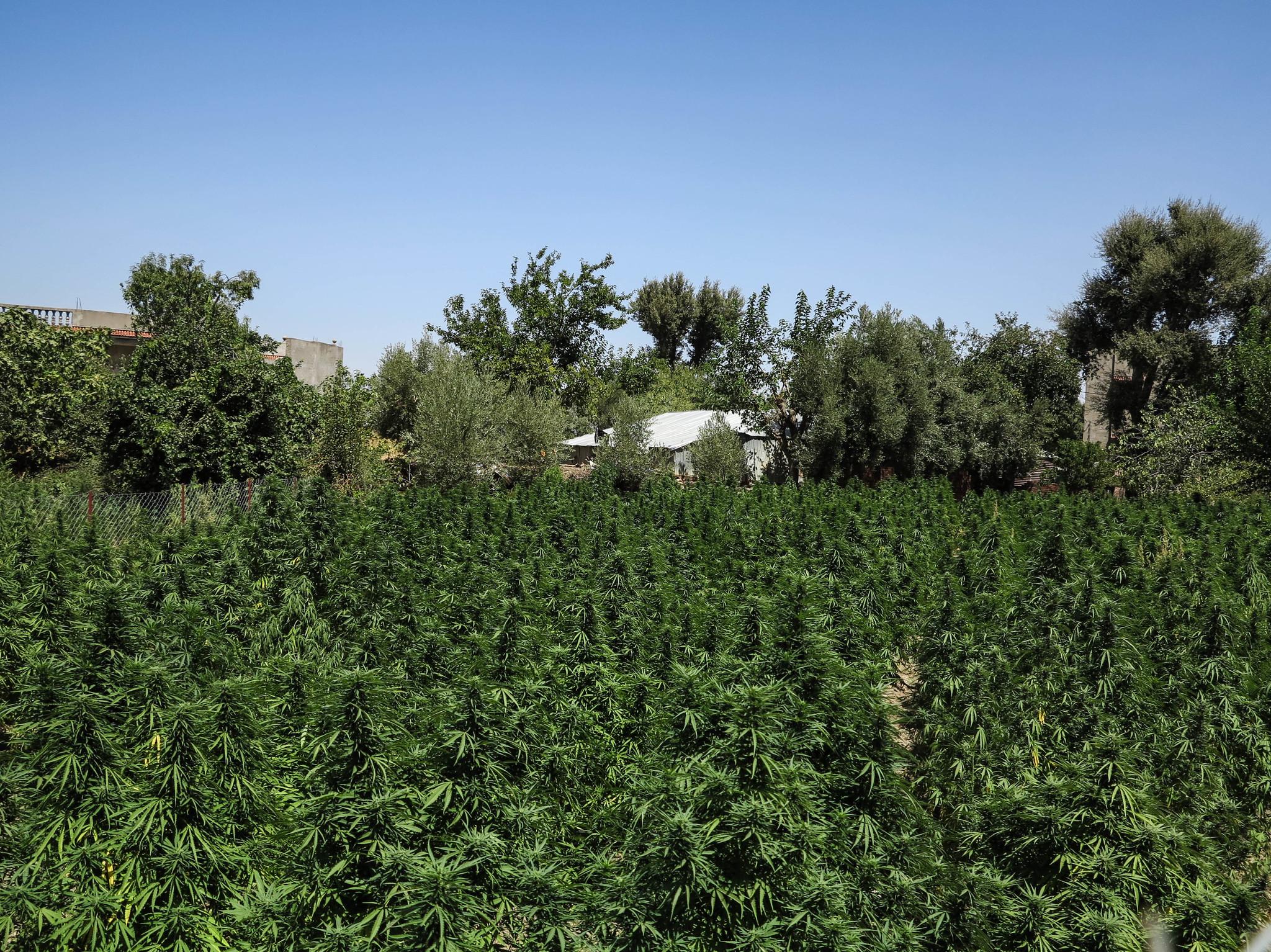 El negocio de los estupefacientes supone el 10% del PIB de Marruecos