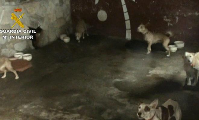 Instalaciones del criadero ilegal donde los guardias civiles encontraron a los perros.
