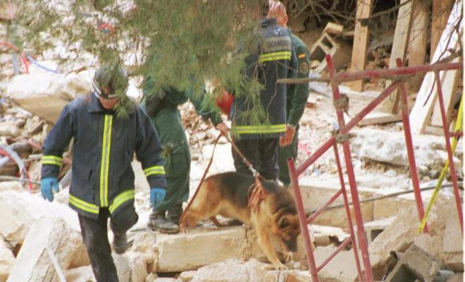 Bomberos con perros participantes en el rescate buscando entre los escombros.