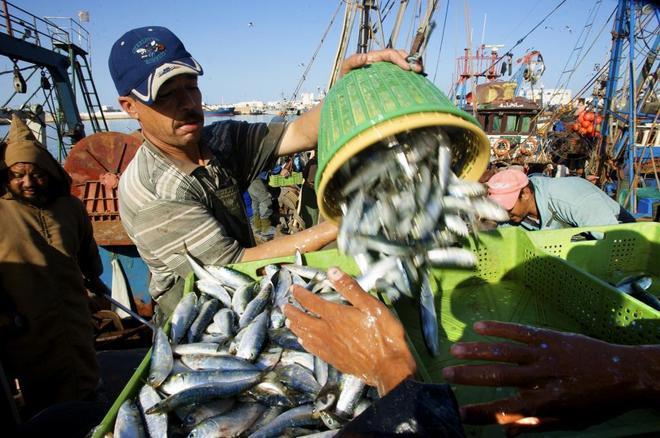 Pescadores en El Aaiun, en el Sáhara Occidental.