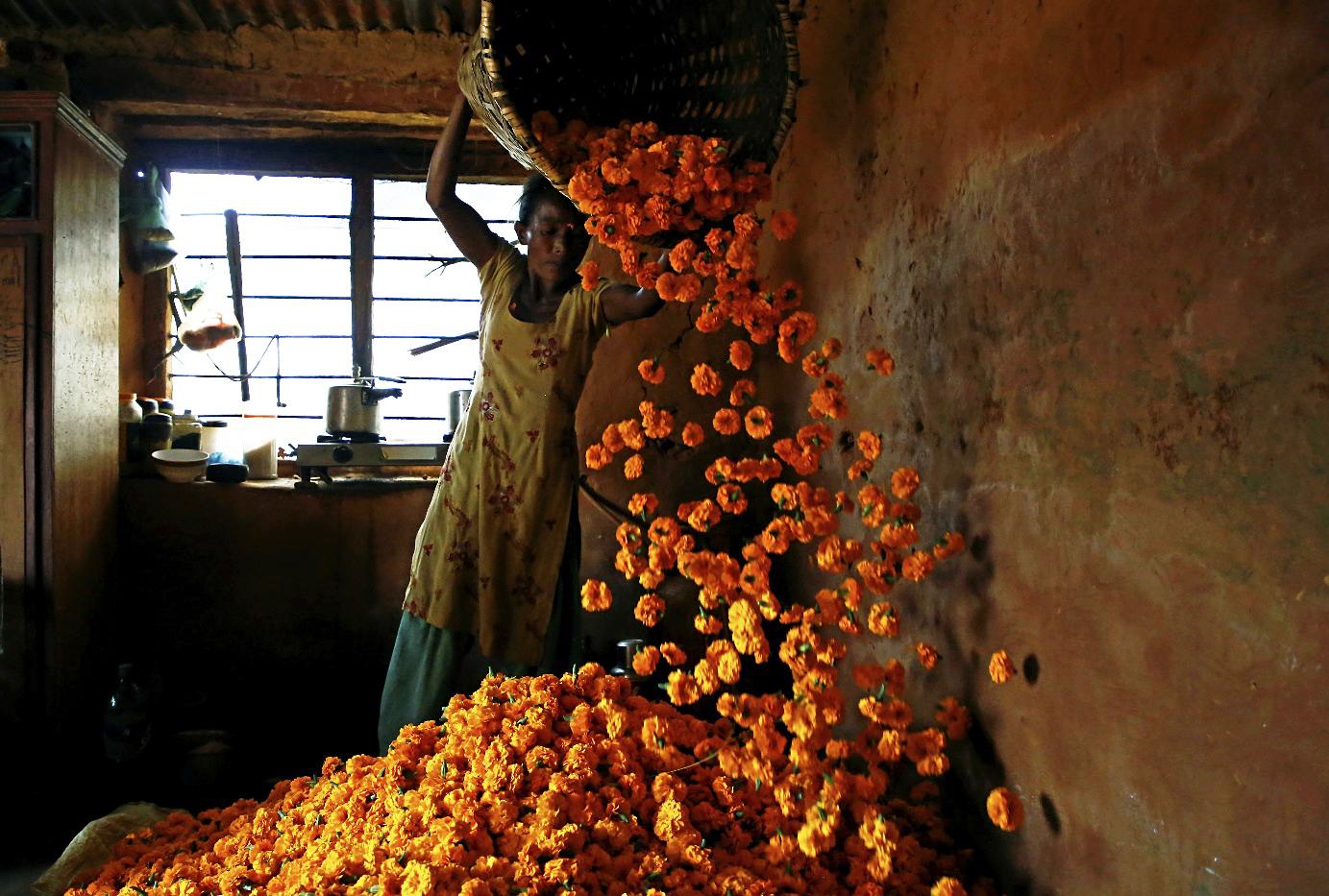 Una mujer descarga flores utilizadas para hacer ofrendas de guirnaldas en el festival de Diwali en Katmandú, Nepal.
