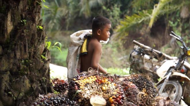 Imagen del reportaje sobre el aceite de palma de 'Equipo de investigación'.