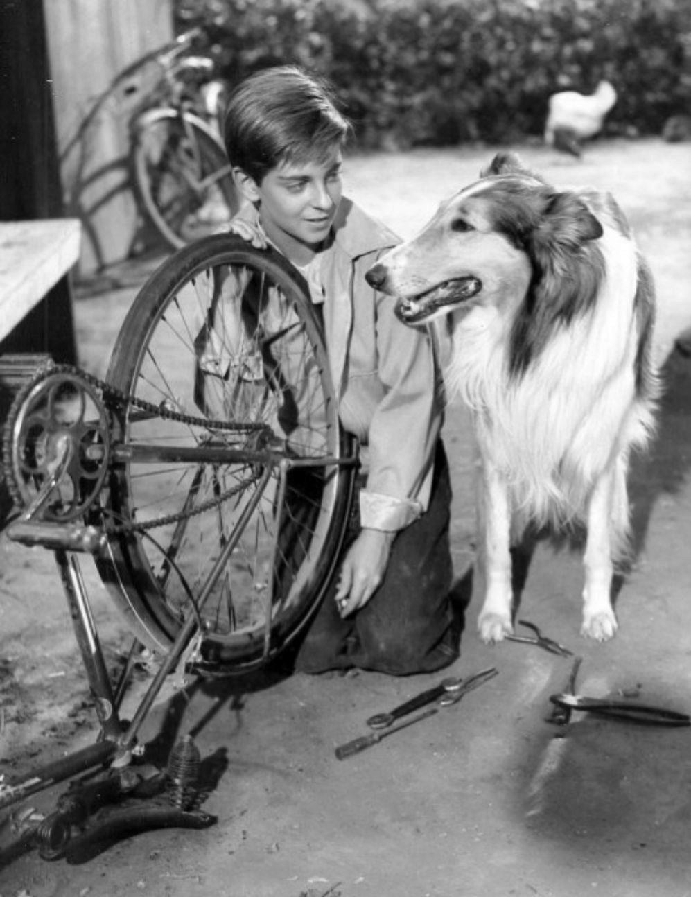 Lassie es un personaje de ficción que ha protagonizado durante años...