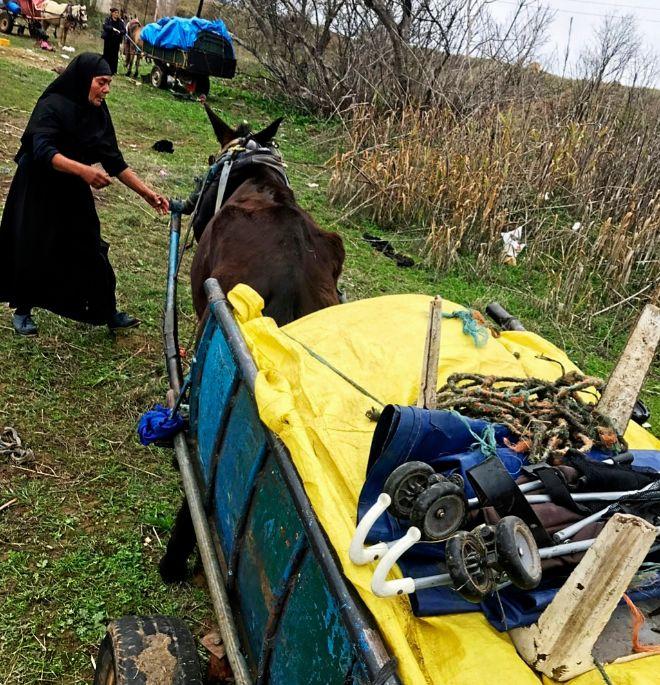 Una mujer tira de uno de los animales que fueron incautados por la...