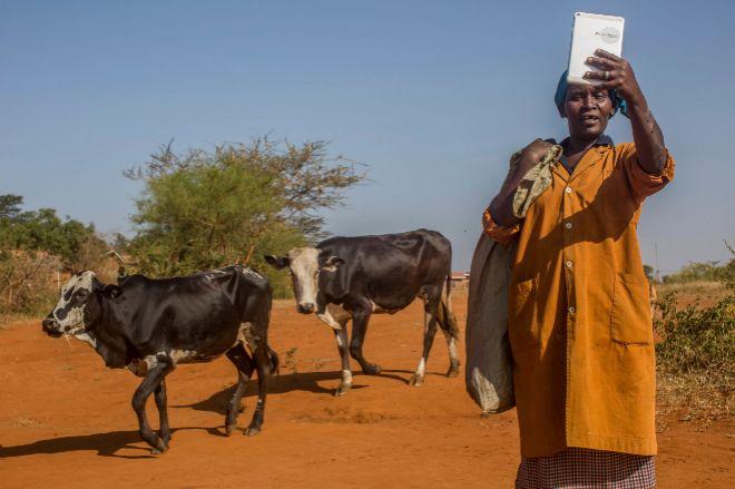 Una de las abuelas de Nyumbani sostiene una tablet mientras cuida de las vacas.