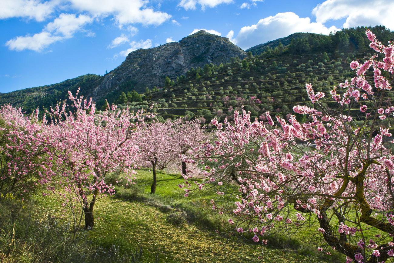 Rodeado por las sierras de Aitana, Serella y Xortá, este valle de...