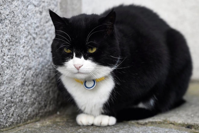 Palmerston, el gato del Ministerio de Exteriores británico, descansa junto al número 10 de Downing Street