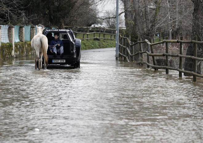 Un joven ayuda a un caballo a pasar por una carretera inundada en Pamplona.