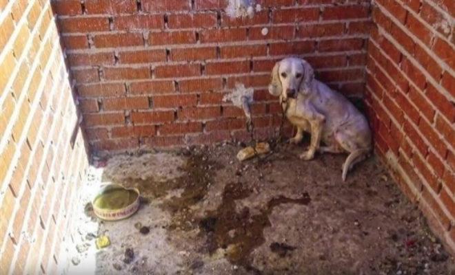 Uno de los perros maltratado, rodeado de heces y orines.