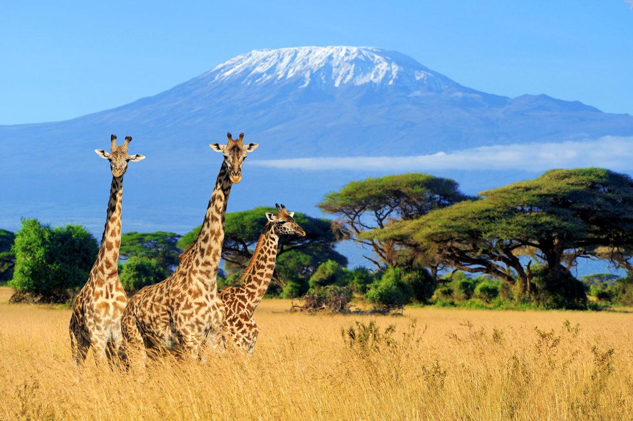 Viaje al corazón de África a través de los mejores safaris....