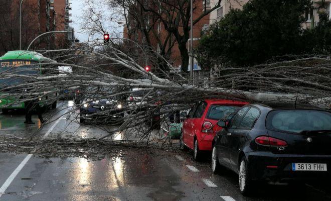 Árbol caído sobre unos coches en la Avenida de Padre Piquer, número...