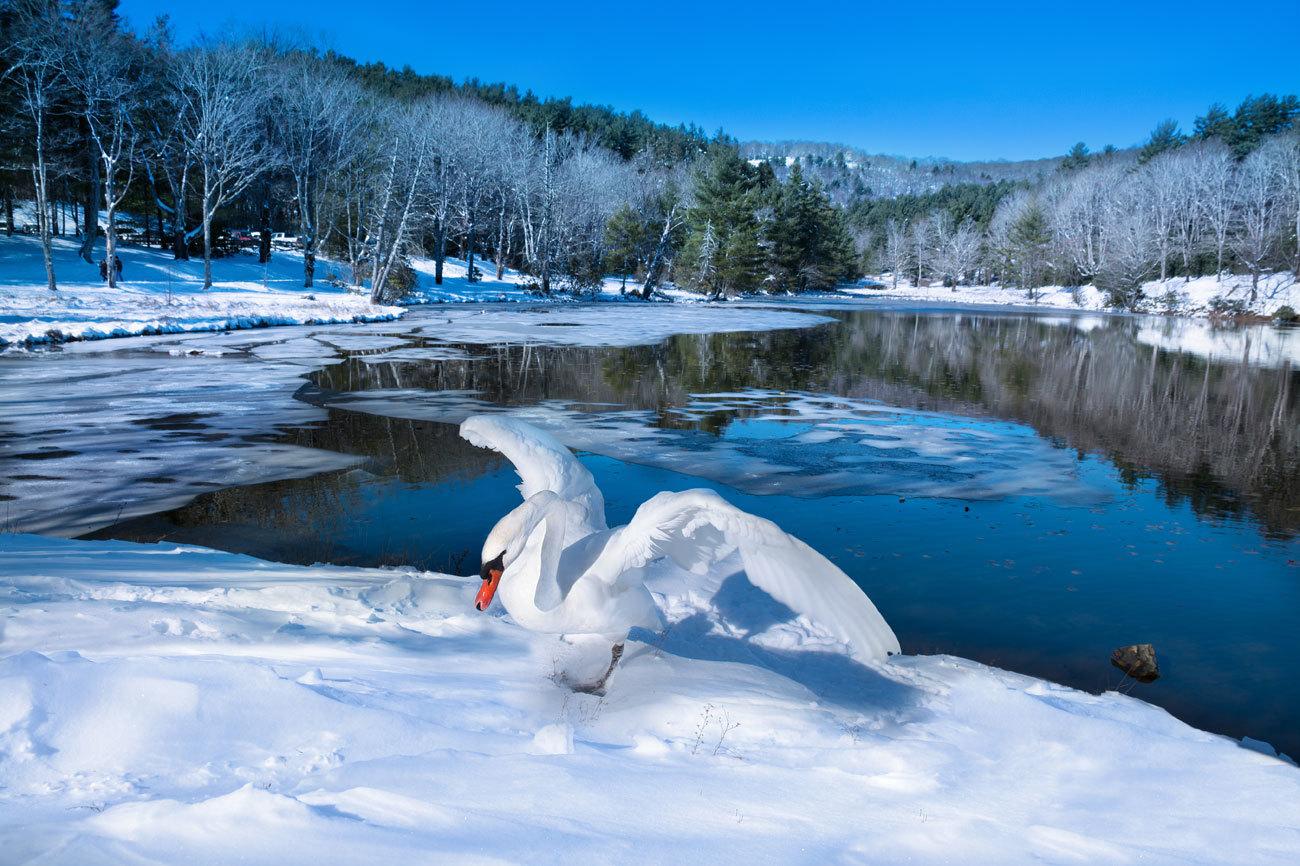 Es el Parque Nacional más visitado de Estados Unidos...