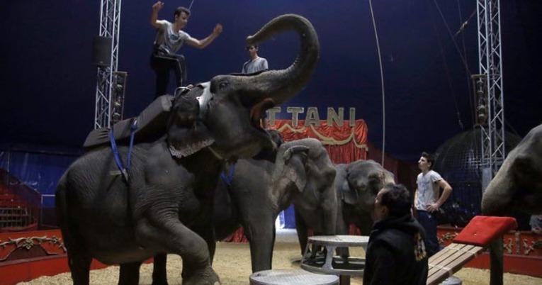 Ni circos ni zoos