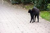 Imagen de un gato negro, símbolo de mala fortuna