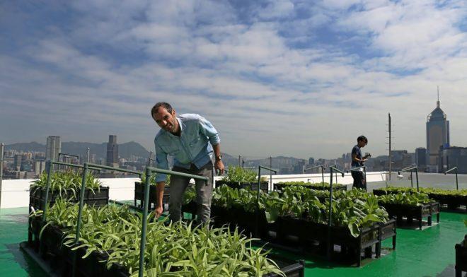 Pol Fábrega promueve la agricultura urbana en la región asiática