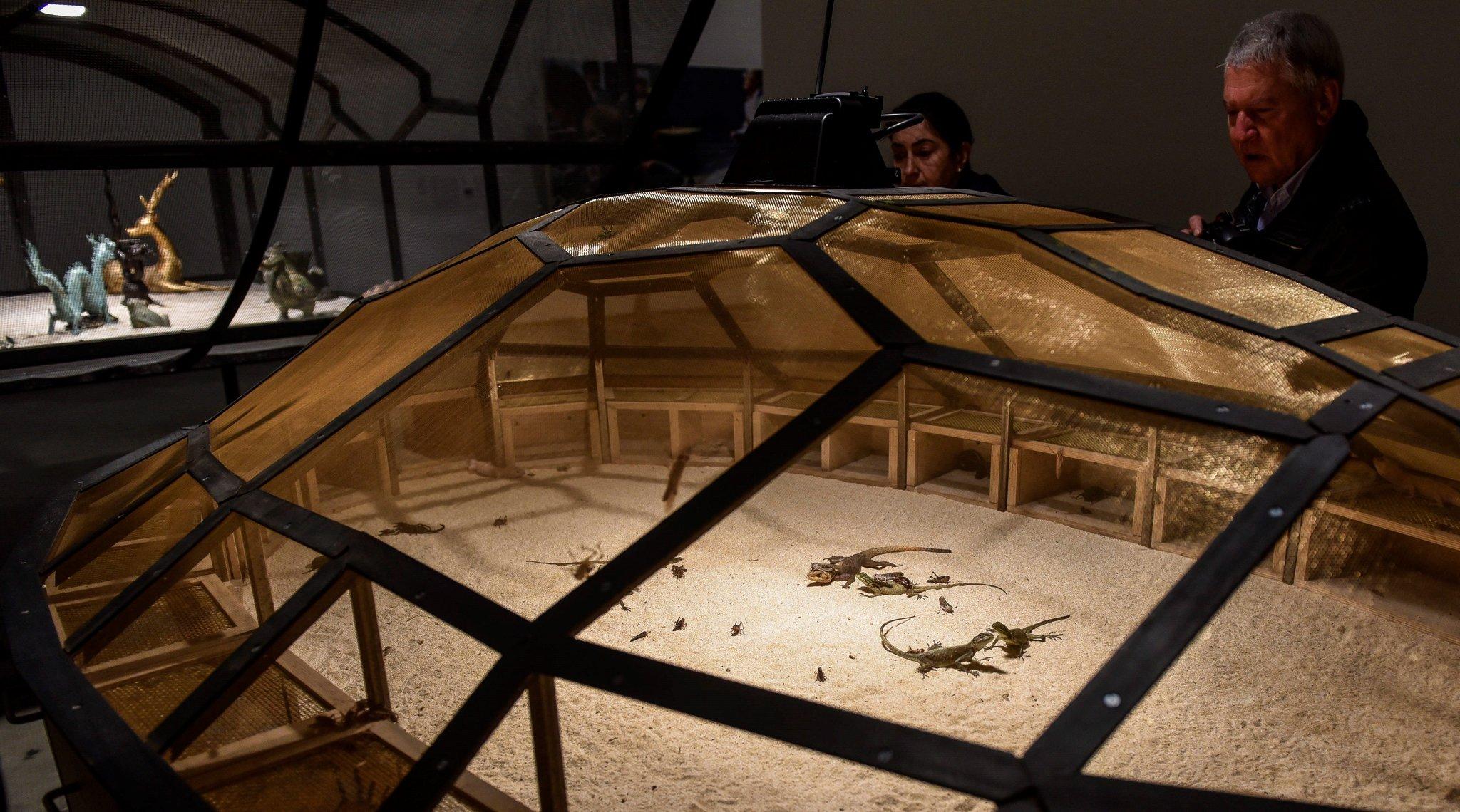 Varios pequeños insectos y reptiles en la exposición.