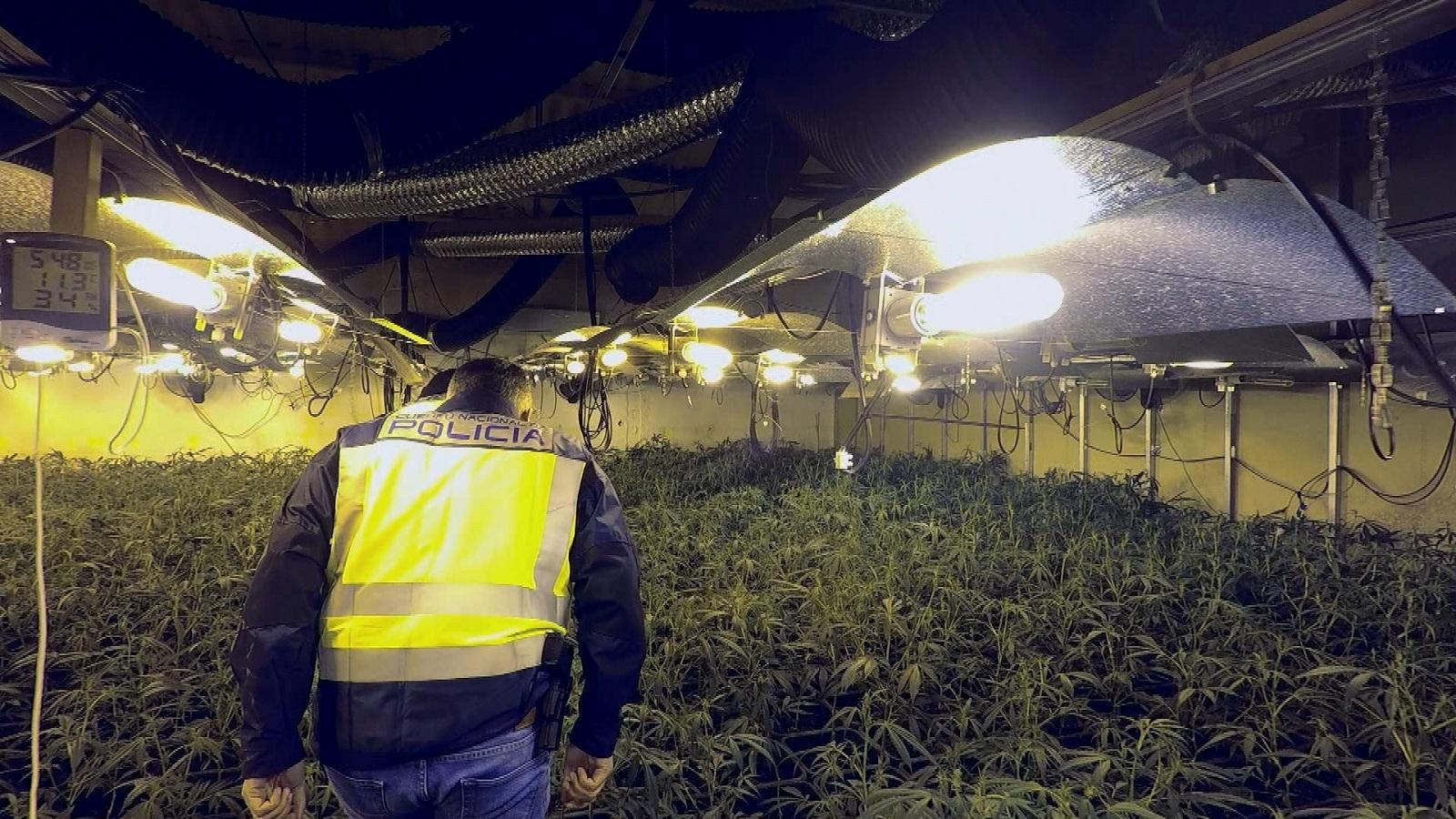 Marihuana 'made in China', protagonista en el regreso a DMax de '091: alerta policía'