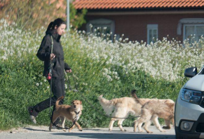 Irene Montero, con sus tres mascotas.