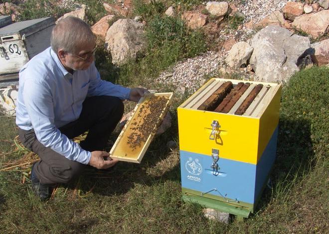 La UE prohíbe tres insecticidas considerados peligrosos para las abejasEl