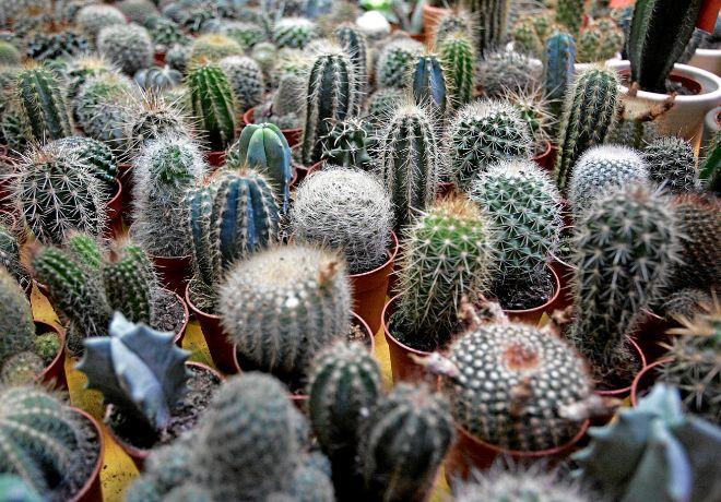Las tiendas de flores y plantas más especiales de Madrid  b7c34a742e10d