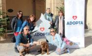 Imagen de la campaña social para la adopción de mascotas