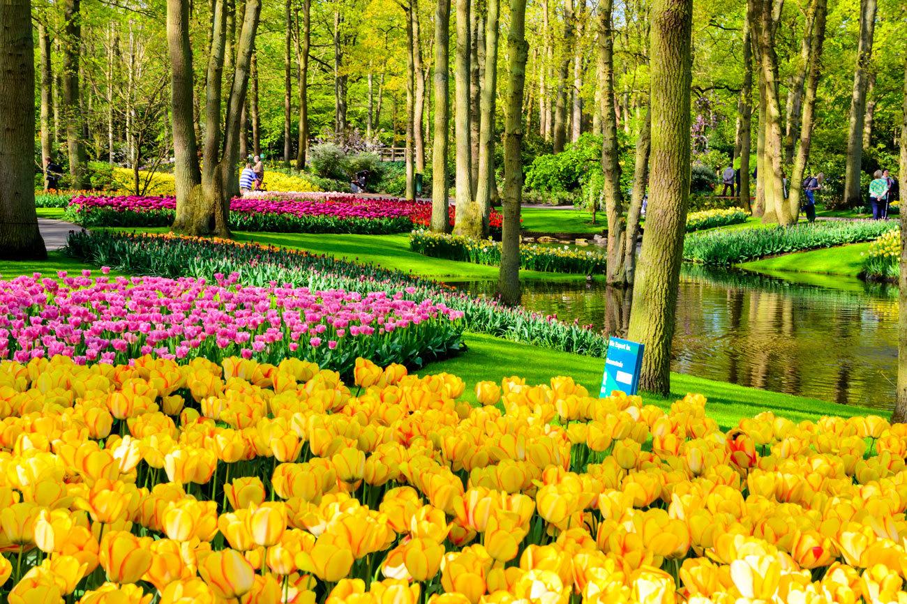 Más de siete millones de bulbos y 800 variedades de...