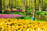 Más de siete millones de bulbos y<strong> 800 variedades de...