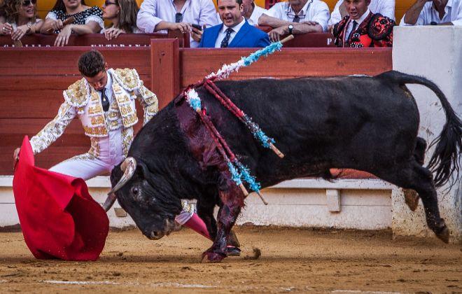 Carretero inició su primera faena como matador de toros con un torero prólogo genuflexo