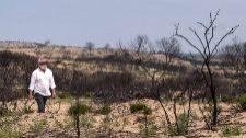 100 millones quemados en Doñana