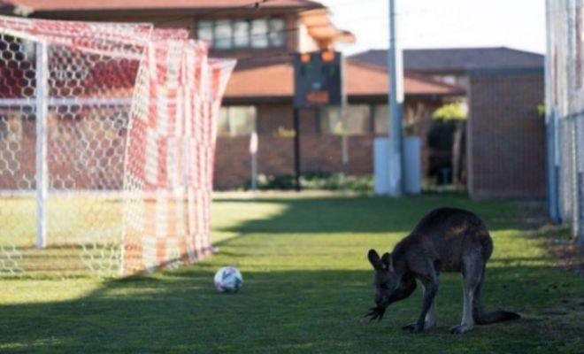 La selección australiana apurará el martes ante Perú sus opciones
