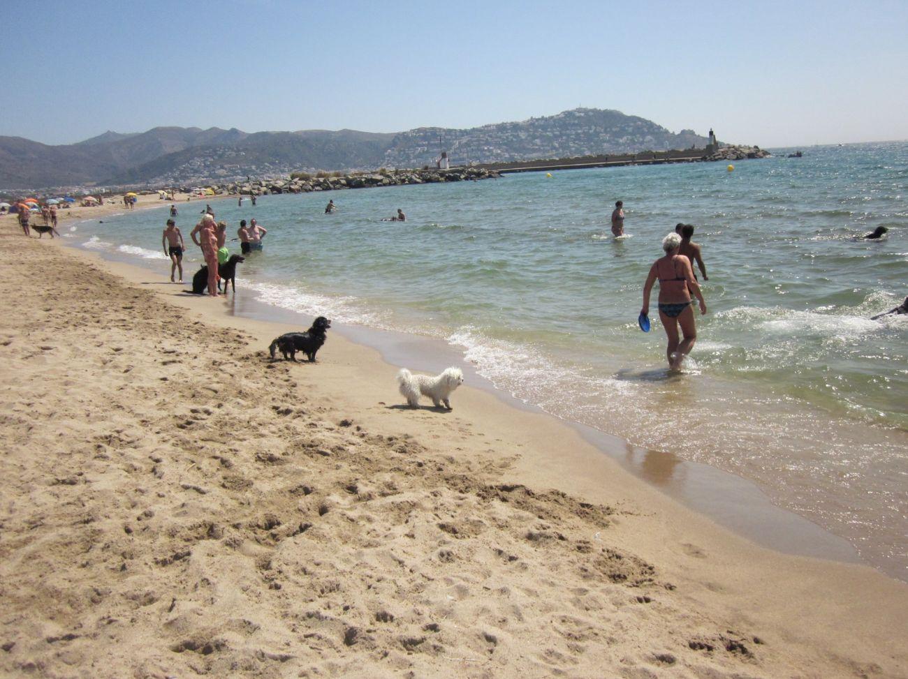 Fue la primera playa para perros de España, y desde hace siete años,...