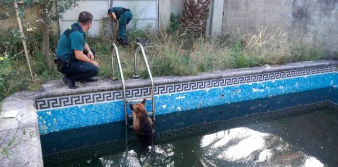 En el momento de la detención uno de los canes estaba atrapado sin poder salir de la piscina.