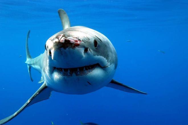 REINO UNIDO: ¡Que vienen los tiburones!