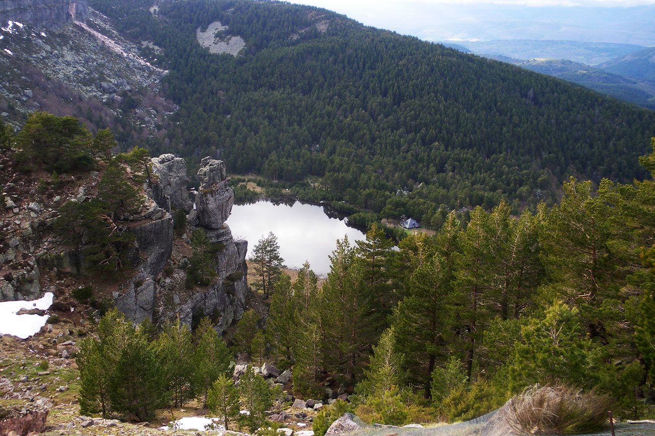 Si hay un lugar de la Península donde los bosques de pinos adquieren...