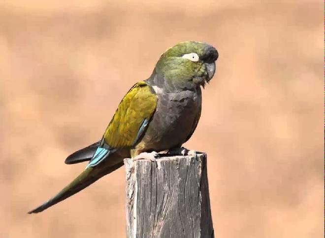 El animal sustraído, de raza barranquera y de origen sudamericano,