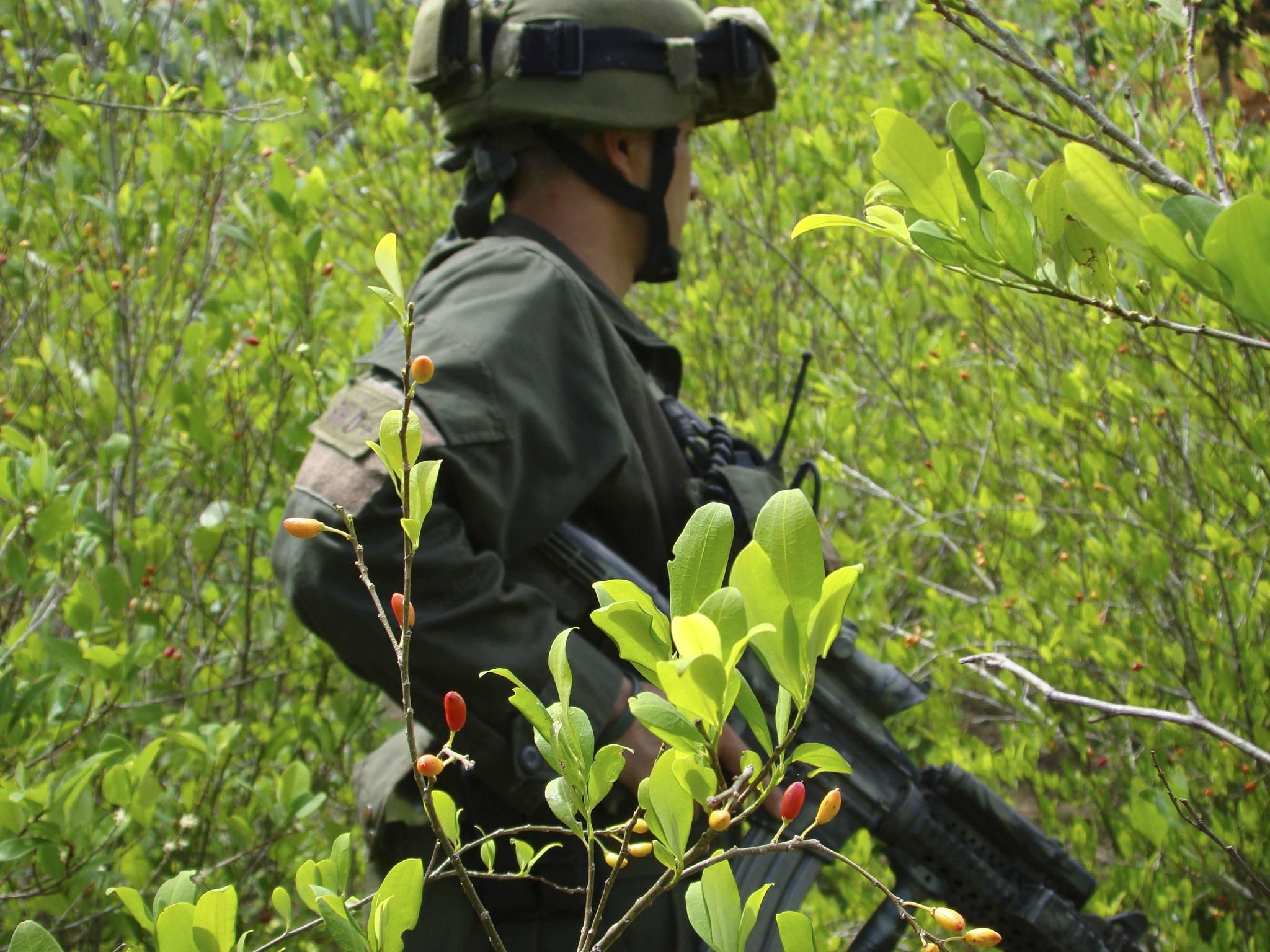 Policía en un campo de coca al sur del departamento del Cauca.
