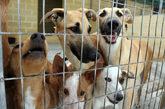 Varios perros en una jaula de una protectora de animales.
